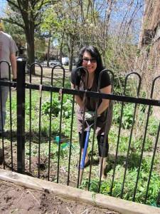 Garden Clean Up1